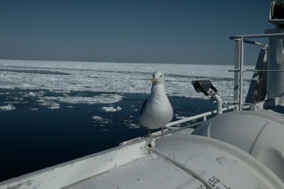 drift-ice-202002-06.jpg