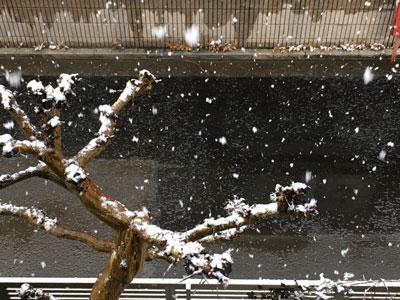 snow-20210128-0.jpg