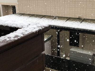 snow-20210128-1.jpg